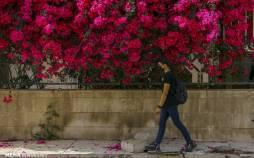 تصاویر اهواز در محاصره گل های کاغذی,عکس های گل های کاغذی در اهواز,تصاویری از تزئین شهر اهواز با گل های کاغذی