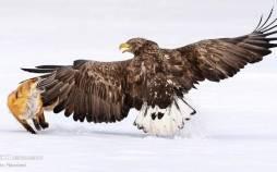 فینالیست های مسابقه عکاسی از پرندگان سال ۲۰۲۱,تصاویر حیوانات,مسابقه عکاسی از پرندگان سال ۲۰۲۱