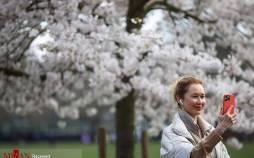 تصاویر شکوفههای بهاری,عکس شکوفه ها در بهار,تصاویری از فصل بهار