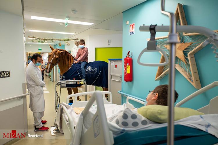 تصاویر درمان بیماران سرطانی توسط اسب,عکس های درمان بیماران سرطانی,تصاویر روحیه دادن یک اسب به بیماران سرطانی