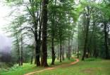 مناطق جنگلی اتحادیه اروپا,نابودی جنگل در ایران