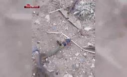 فیلم/ حمله باورنکردنی و حیرتانگیز مورچه غولپیکر به یک مار