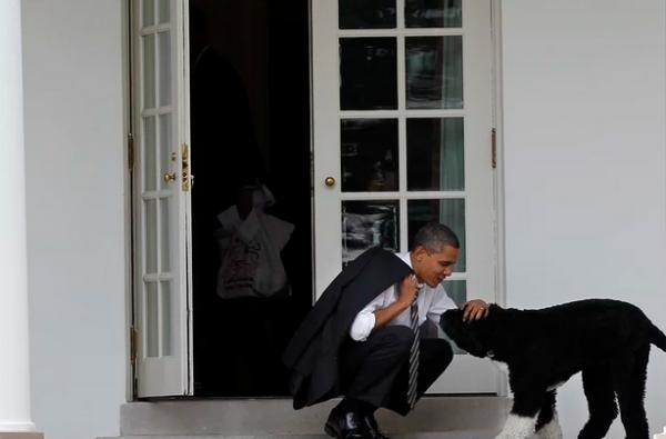 مرگ سگ خانوادگی اوباما,خبر مرگ بو سگ خانوادگی اوباما