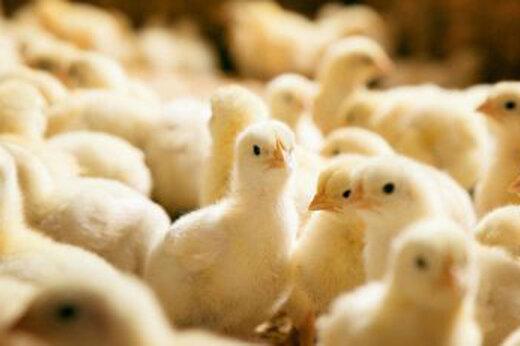 اتحادیه سراسری مرغ گوشتی کشور,قیمت مرغ در بازار
