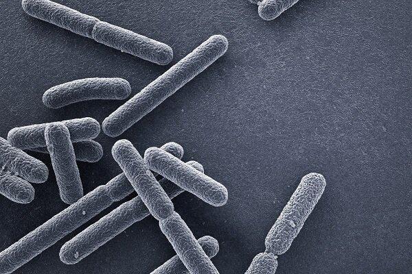آنتی بیوتیک,دارویی برای مقاومت در برابر آنتی بیوتیک