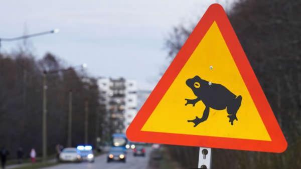 قورباغه,قورباغه ها در استونی