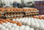 قیمت هر کیلوگرم تخم مرغ درب مرغداری,قیمت تخم مرغ