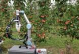 ابداع رباتی برای چیدن سیب,چیدن سیب با ربات