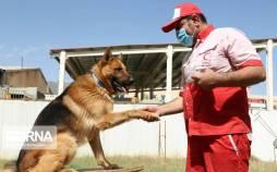 تصاویر آموزش و نگهداری سگهای زندهیاب,عکس های آموزش سگ ها,تصاویر آموزش و نگهداری سگهای زندهیاب