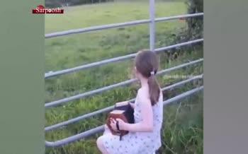 فیلم/ تاثیر موسیقی بر گاوها