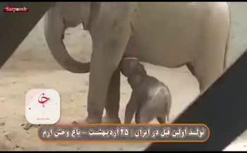فیلم/ تولد نخستین فیل در ایران