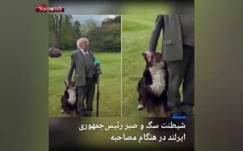 فیلم/ سوژه شدن شیطنت سگ رئیسجمهور ایرلند
