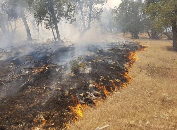 آتش سوزی در جنگل های کوه حاتم,آتش سوزی در جنگل