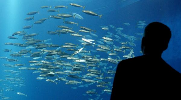ماهی,مهاجرت ماهی پس از گرم شدن اقیانوس