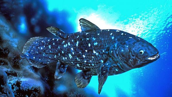 زیست شناسی عجیب یک ماهی با عمر یک قرن,ماهی