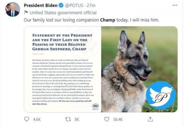 جو بایدن,مرگ سگ بایدن