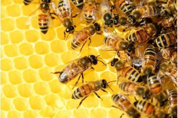 زنبور,تشخیص زمان به روش زنبورها