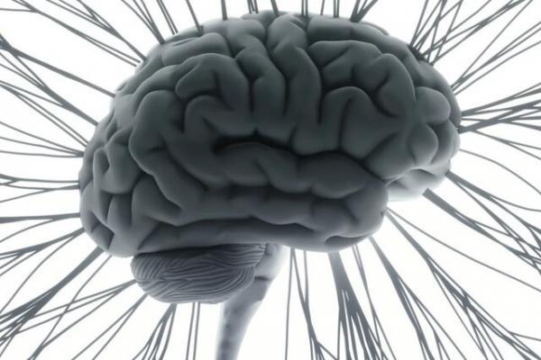 مغز, فطری بودن موسیقی