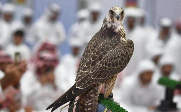 تصاویر مسابقه انتخاب زیباترین شاهینها,عکس های مسابقه شاهین ها در امارات,تصاویر زیباترین شاهینها در امارات