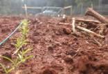 گیاهان,نیاز گیاهان به آسپیرین