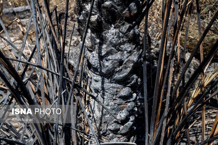 تصاویر سوختن بیش از ۲۲۰۰ نخل در نخلستانهای اروندکنار,عکس های نخلستانهای اروندکنار,تصاویر بازمانده های نخلستانهای اروندکنار
