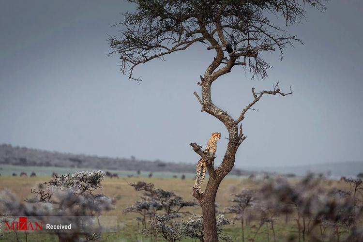تصاویر مسابقه عکاسی حفاظت از جهان,مسابقه عکاسی حفاظت از جهان,عکس های مسابقه عکاسی صندوق ویتلی