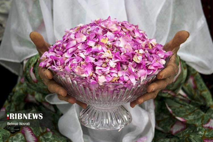 تصاویر آیین ملی و مذهبی گل غلتان,عکس های مراسم گل غلتان,تصاویری از مراسم مذهبی گل غلتان