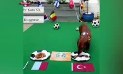 فیلم/ پیش بینی بازیهای یورو 2020 توسط یک سگ؛ تساوی ترکیه و ایتالیا
