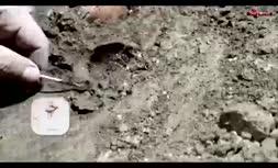 فیلم/ کشف اسکلت کودک ۱۲ هزار ساله در بهشهر