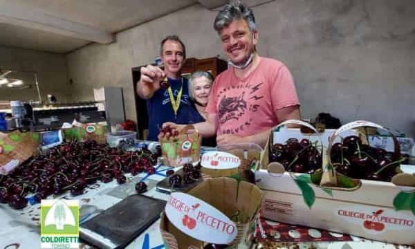 گیلاس,پرورش بزرگترین گیلاس تاریخ در ایتالیا