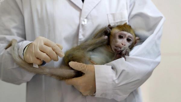 آبله میمونی در چین,ویروس جدید در چین