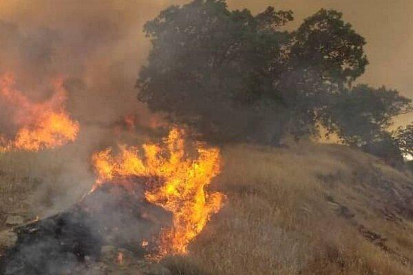 وقوع آتش سوزی گسترده در جنگلهای بوزین و مرهخیل پاوه,آتش سوزی جنگل ها
