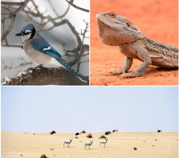 عکس حیوانات,طراحی ساختمان