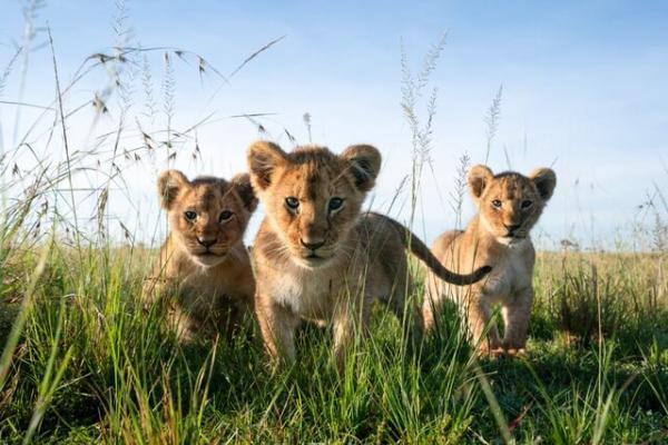 حیات وحش,محیط زیست آفریقا