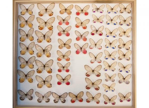 پروانه,حشرات