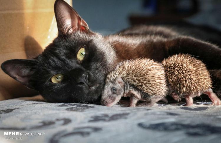 تصاویر دوستی جالب میان حیوانات در طبیعت,عکس های دوستی حیوانات,تصاویری از دوستی میان حیوانات