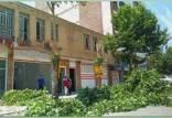 قطع درختان در یاسوج به خاطر تابلوی یک فروشگاه,قطع درختان در یاسوج