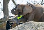 فیل,انیکور و پدیکور ناخن فیلها