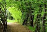 حکم قطعی بازگشت جنگلهای آق مشهد ساری,