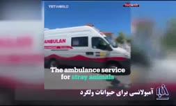 فیلم/ طراحی آمبولانسی برای حیوانات آسیبدیده در ترکیه
