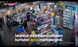 فیلم/ فرار گاو از دست صاحب خود و ورود به سوپرمارکتی در ترکیه