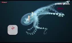 فیلم/ کشف اختاپوس شیشهای در اعماق اقیانوس آرام