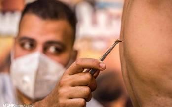 تصاویر درمان روماتیسم با نیش زنبور در مصر,عکس های درمان روماتیسم با نیش زنبور,تصاویر درمان روماتیسم در مصر