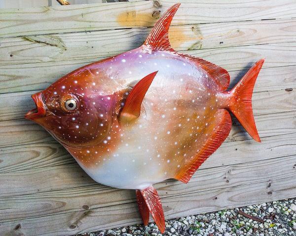 ماهی,ماهی اقیانوسی در سواحل آمریکا