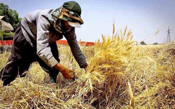 کشاورزی ایران,کمیاب شدن مرغ