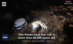فیلم/ کشف اجساد ۲ توله شیر عصر یخبندان