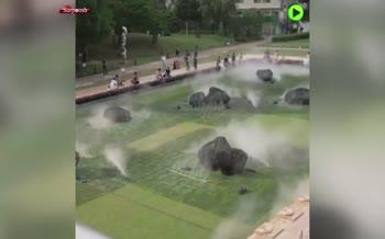 فیلم/ روش شگفتانگیز ژاپنیها برای خنک کردن پارکها در تابستان