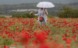 تصاویر دشت شقایق در شبهجزیره کریمه,عکس های دشت کریمه در کریمه,تصاویری از گل های شقایق در کریمه