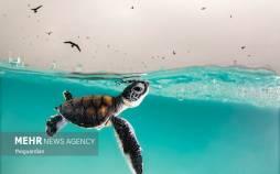 برترین تصاویر عکاسی اقیانوس ۲۰۲۱,عکس های اقیانوس,تصاویر زیبا از اقیانوس