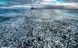 برترین تصاویر مسابقه عکاسی حیات وحش ۲۰۲۱,تصاویر مجموع عکسهای برگزیده از مسابقه عکاسی حیات وحش ۲۰۲۱ ,عکس های مسابقه عکاسی حیات وحش